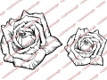 Visible Image Roses