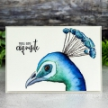 Bild 2 von Colorado Craft Company Clear Stamps - Big & Bold~Hope Sings Peacock