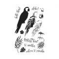 Hero-Arts-Clear-Stamps-Color-Layering-Parrot
